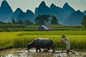 sektor-pertanian-di-indonesia-saat-ini